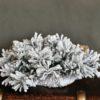 Podkład pod stroik świąteczny ośnieżona na biało
